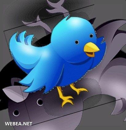twitter pajaro